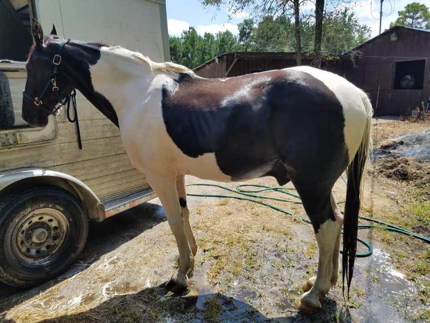 excalibur-farm-horse