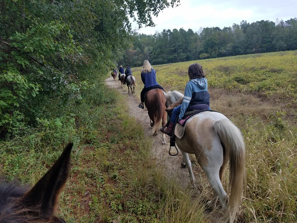 horses-trails-country